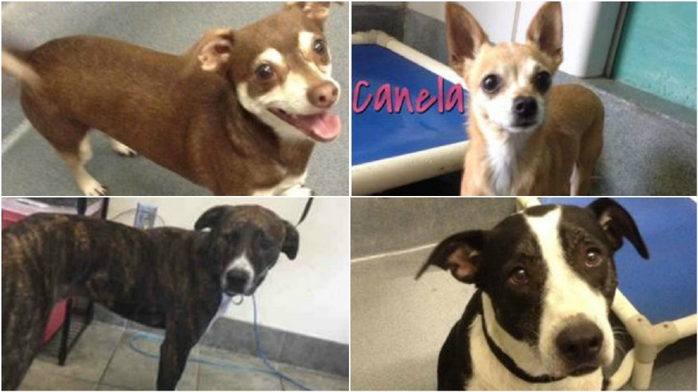Foster Dogs For Adoption In San Antonio