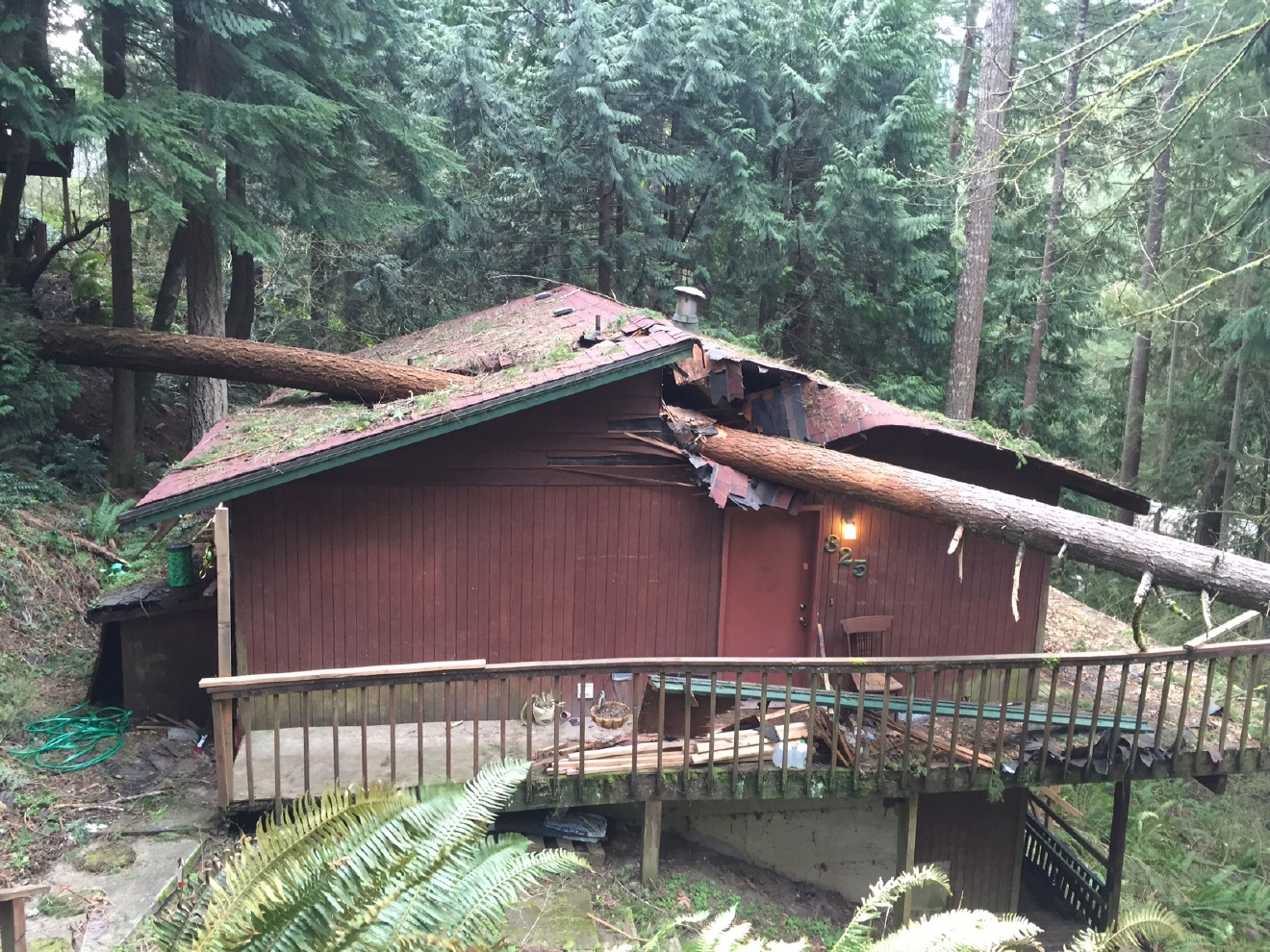 KOMO Photo of tree into home in Bellingham
