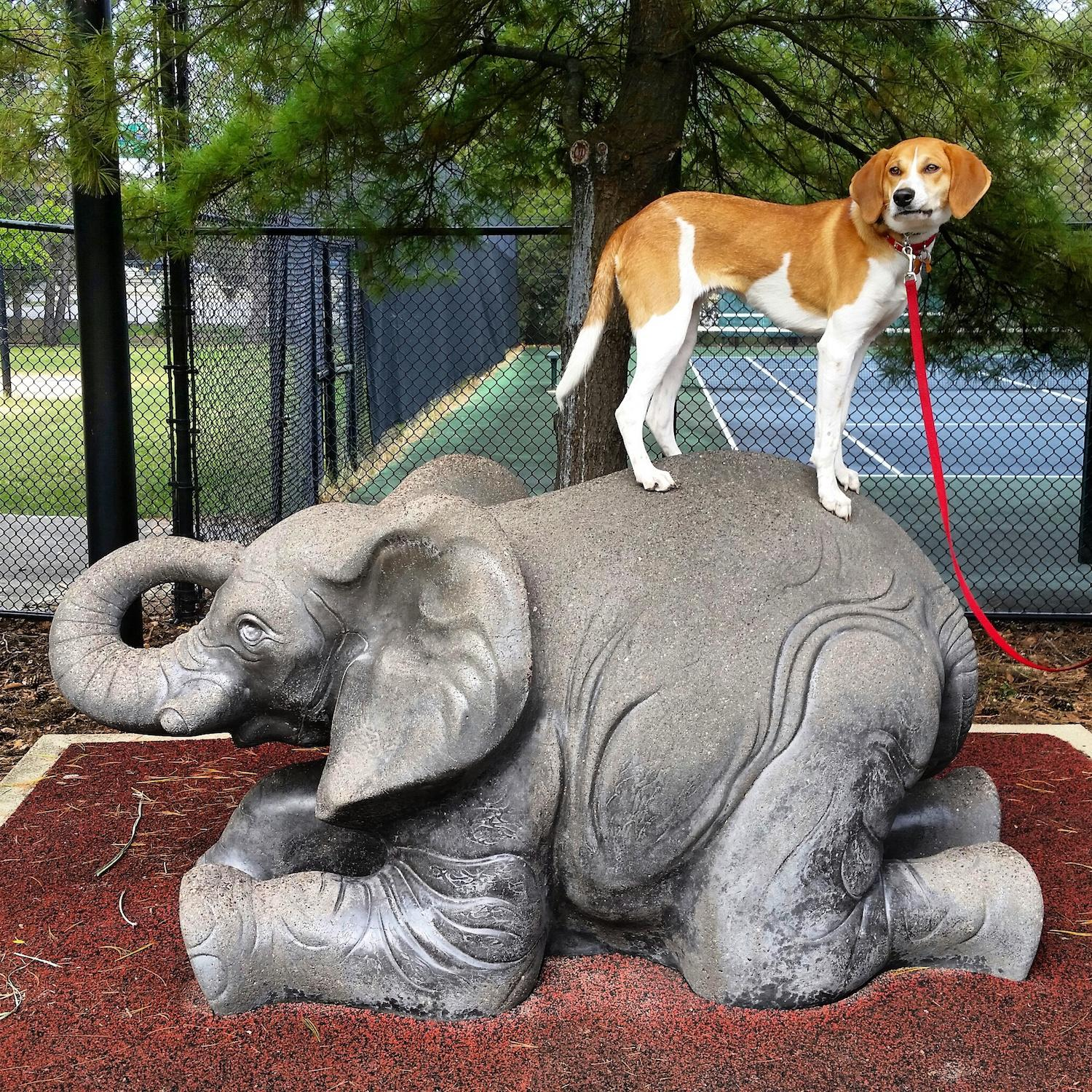 LOCATION: Sawyer Point / Mollie is a local Instagram celebrity. Famous for posing on fire hydrants in front of ArtWorks murals (and other Cincy landmarks), this hound dog has officially stolen our hearts. You can follow her adventures on Instagram @molliethehounddoggie / Image: Patti Mossey (Mollie's owner and #1 fan) // Published: 5.1.18