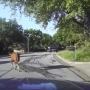 VIDEO: Police in 'hot pursuit' of bull on the loose