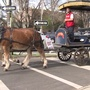 How hot is too hot for carriage horses? Tourism commission recommends changes