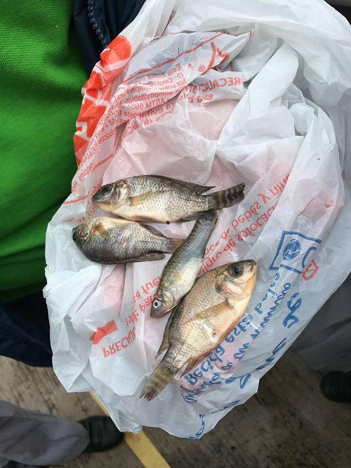 Civil defense officials in northeast Mexico say a light rain was accompanied by small fish that fell from the sky. (Facebook/Protección Civil Tamaulipas)