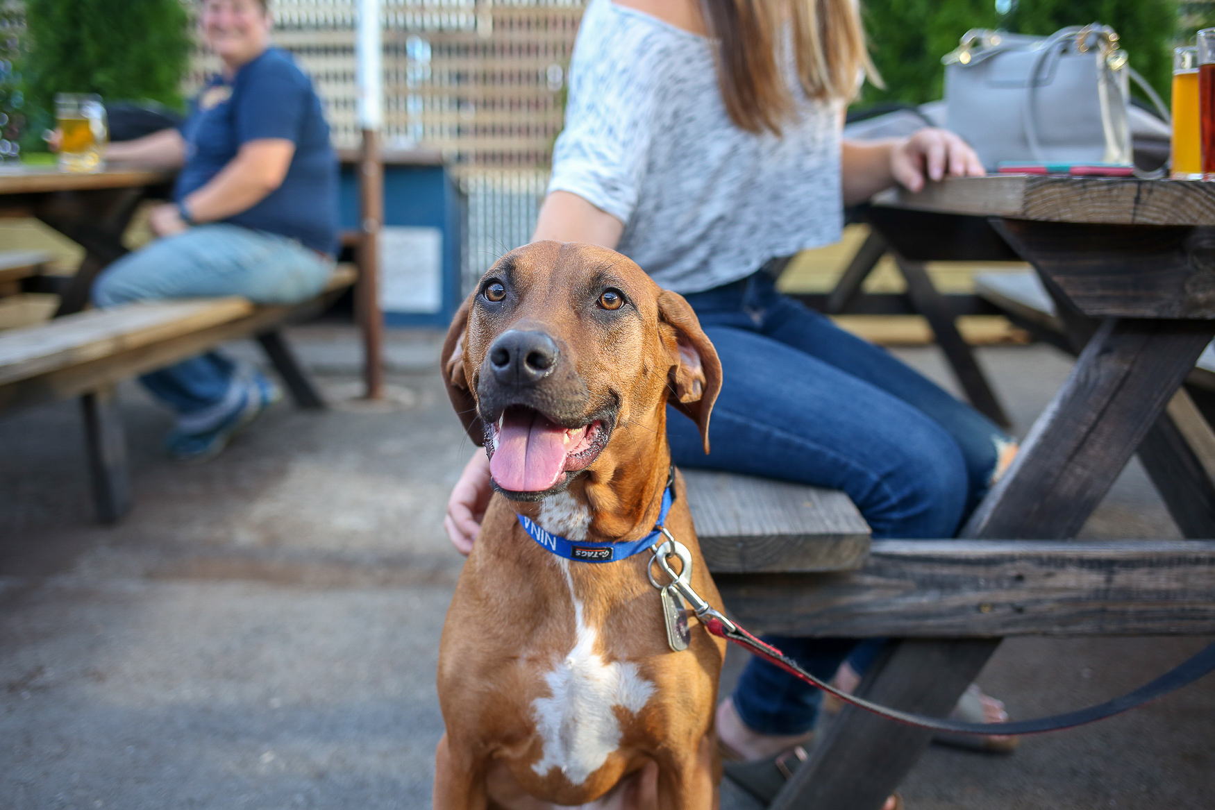 The Midlands Beer Garden is hosting a pup-up bar for a good cause. From 1 p.m. to 4 p.m., dogs will be be delivering beer as your paw-tenders and City Dogs will be roaming around with adoptable pups. Plus, you can submit a photo of your own dog to Adventure Dogs for the chance to have your pup featured on the Devils Backbone's new Gold Leaf can. Admission is free. (Amanda Andrade-Rhoades/DC Refined)