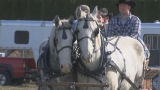 Carriage rides, jousting among activities at 1st annual Plowing Bee & Horse Spectacular