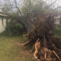 Tree falls, partially strikes homes and car during storm