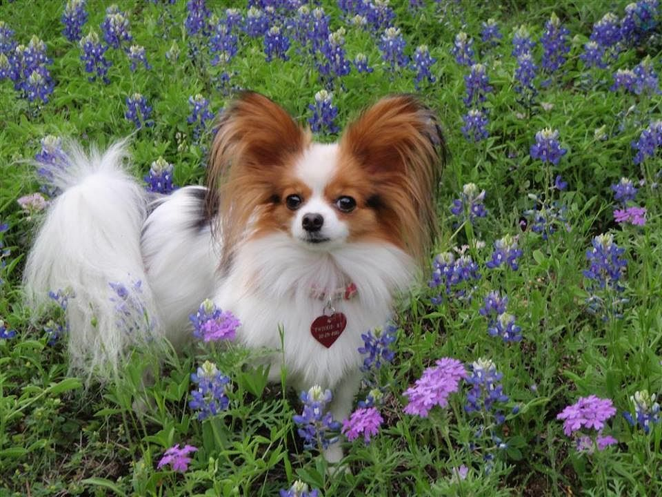 Show us your bluebonnet photos - just text 'SHARE' to 45203.