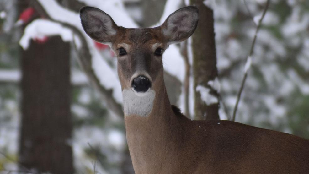 Hunting numbers on the decline, Michigan DNR working to