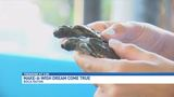Make-A-Wish child gets sea turtle experience