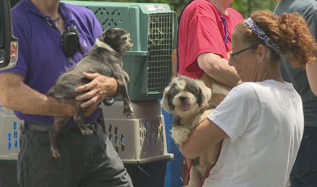 Authorities say dozens of dogs were rescued from a home in Chatsworth Wednesday. (Image: WTVC)<p></p>