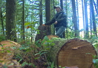 PKG-CHOPPED DOWN TREE_frame_3038.jpg