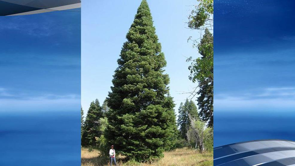biggest christmas tree coming to downtown little rock - Biggest Christmas Tree