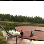 Bandon cranberry growers see prices fluctuate