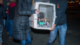 Animal Rescue: Over 100 animals fly to DC from Puerto Rico, dogs up for adoption in Md.
