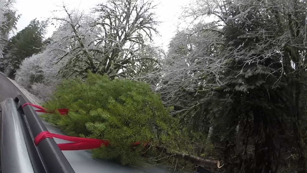 exploregon cut your own christmas tree - Cut Your Own Christmas Tree