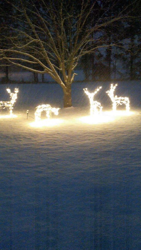 Snow and Christmas lights (Submitted by Cameron Lloyd)