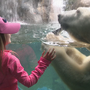 Seneca Park Zoo polar bear dies from severe liver disease
