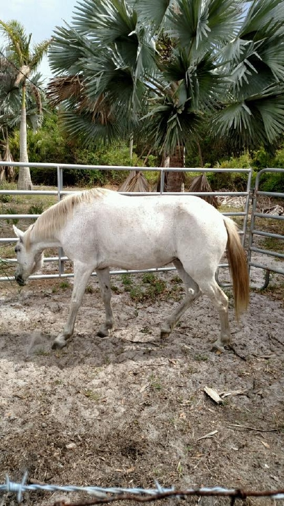 Arrest made in emaciated horses investigation in Martin