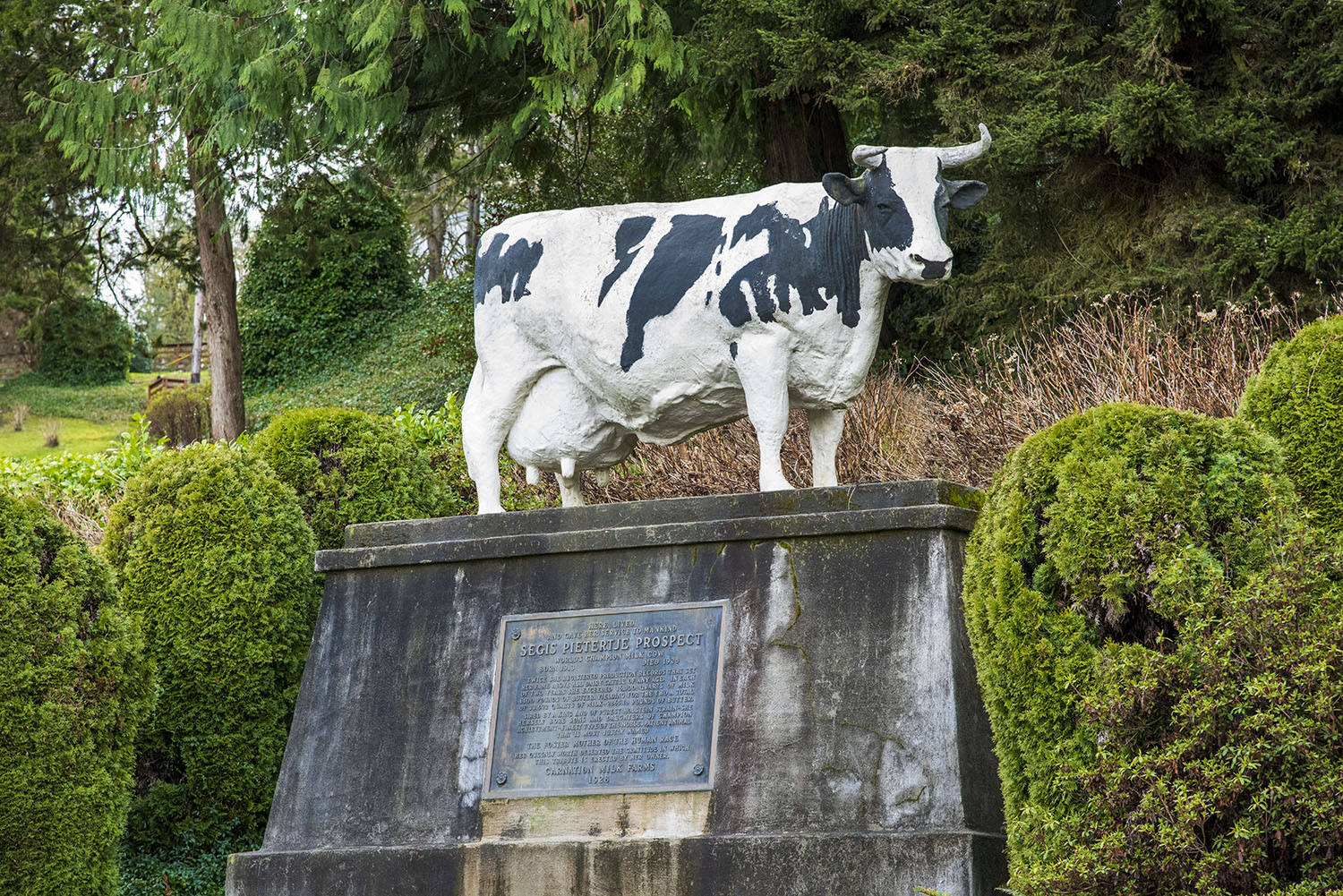 But Possum Sweetheart wasn't the only award-winning dairy cow on the farm. For decades after, Carnation Farms' herds set the standard for breeding stock worldwide and eventually transitioned as a milk production farm to full time genetics research and stewardship farm. (Rachael Jones / Seattle Refined)