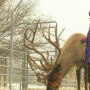 Santa's reindeer 'Prancer' lifts spirits at Idaho cemetery year-round