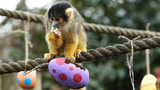 PHOTOS | Animals enjoy egg hunt at ZSL London Zoo