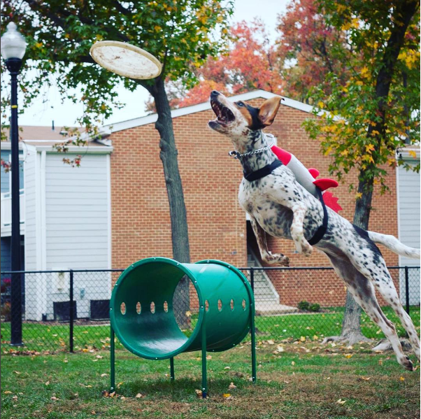 IMAGE: IG user @tails_from_orbit / POST: Took my new rocket #halloween costume out for a test flight!