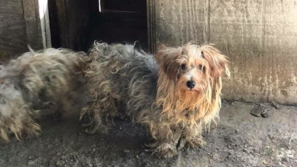 Nashville Shelter Needs Help With 50 Dogs Rescued From Puppy Mill