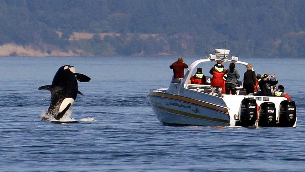 1107 orcas boat tours.jpg