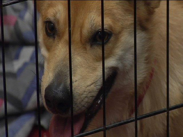 The two-year-old pup, who has been named Taser, is staying at Pets Inc.
