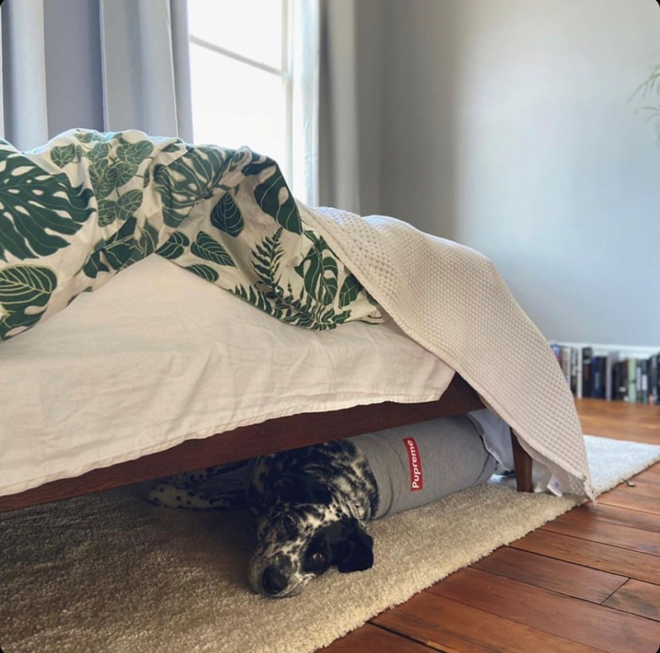 Cleaning (or hiding) under the bed / Image courtesy of Instagram user @lunabugalaska // Published: 4.1.20