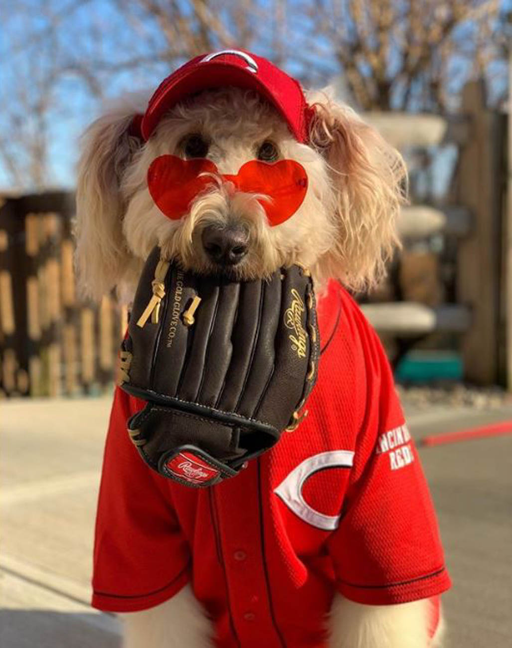 Cheering on the Reds despite a delayed Opening Day / Image courtesy of Instagram user @many_adventures_of_annie_ // Published: 4.1.20