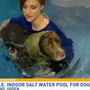 Aqua therapy helps dogs heal and have fun