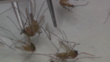 Calhoun County family warns others about West Nile virus