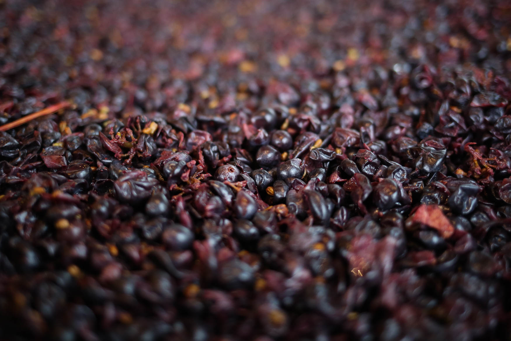 The grape juice and the skins are placed in large bins, where the skins float to the top. That top layer, which is called a cap, is mixed back in to the juice in order to give the wine its complex flavor. (Amanda Andrade-Rhoades/DC Refined)<p></p><p></p>