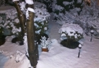 thumbnail_New Years day 2017 SNOW Puyallup.jpg