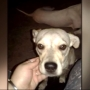 Puppy shot and killed in Steubenville