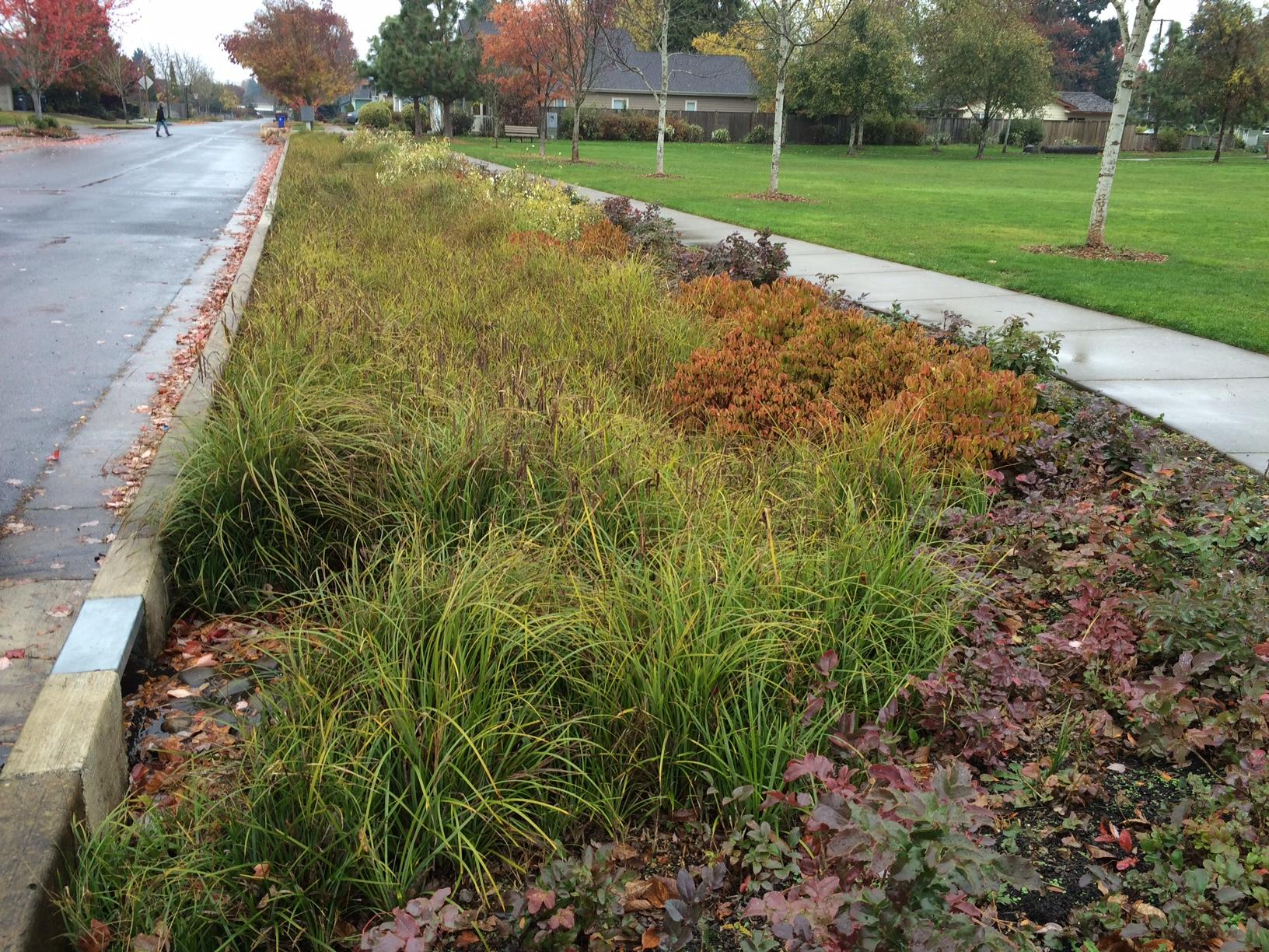 Rain Gardens: Filtering the toxins and pesticides out of our storm drains