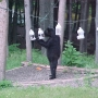 Problem bear gets euthanized after breaking in to four vehicles