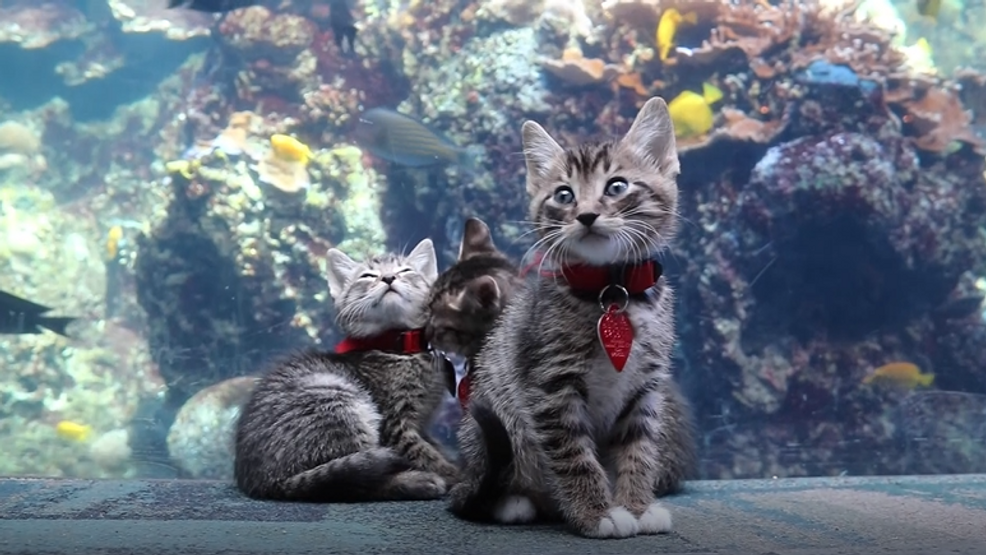 Kittens explore Georgia Aquarium 3.PNG