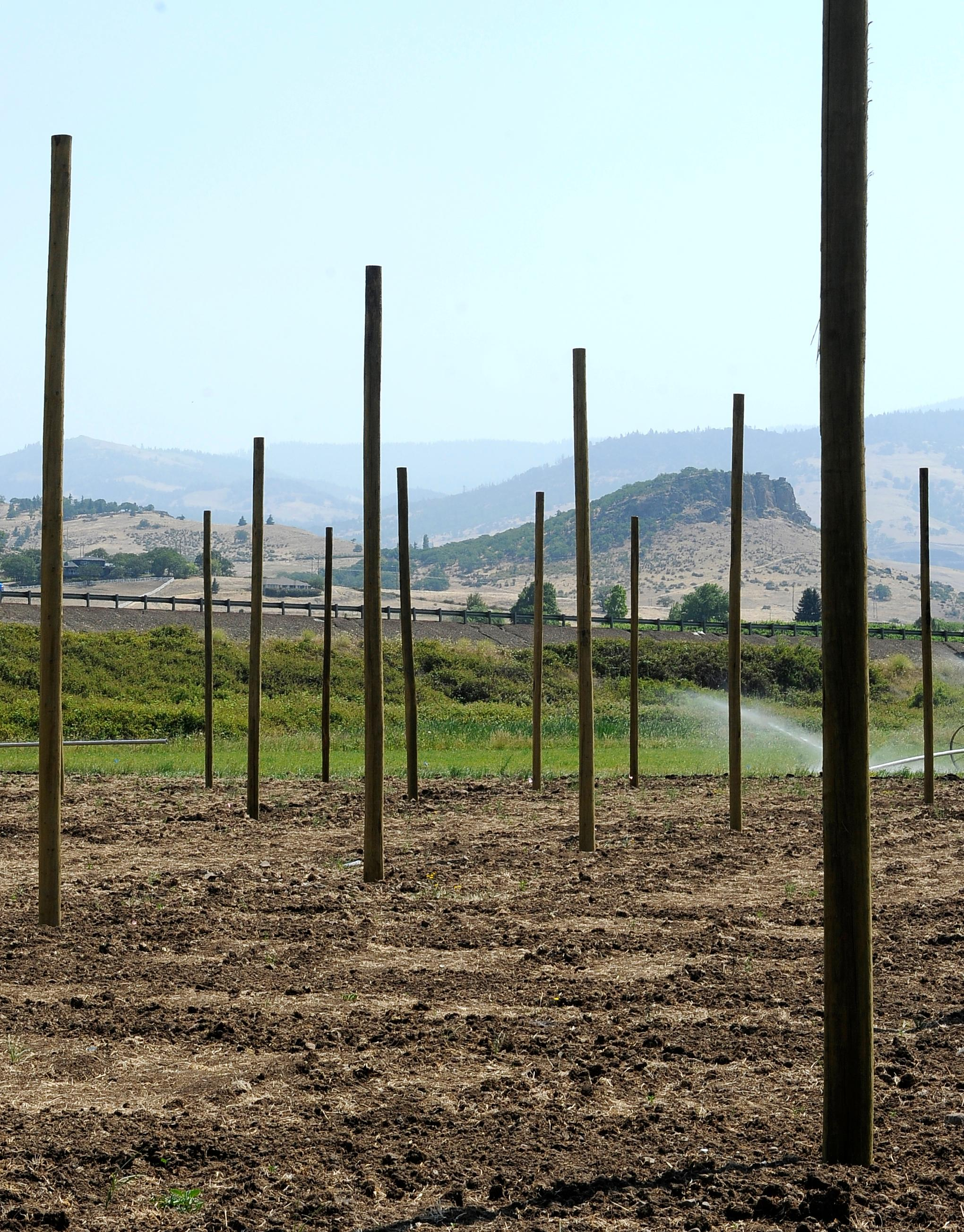 Andy Atkinson / Mail Tribune<br>Poles sit ready to complete the construction of a hop field in Ashland for Base Camp Brewing in Portland.