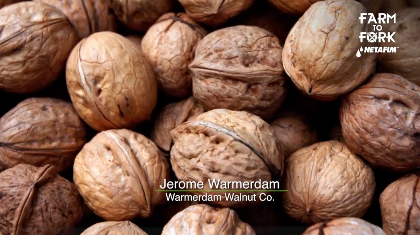 Walnuts are also a great source of omega-3  fatty acid.