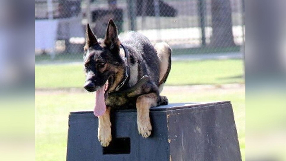Image result for Sony, a Fresno County Sheriff K-9, passed away this afternoon.