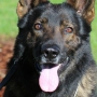 Support for Roseburg K9 program remains strong