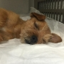 Police: Earl the dog now at foster home; suffered brain injury