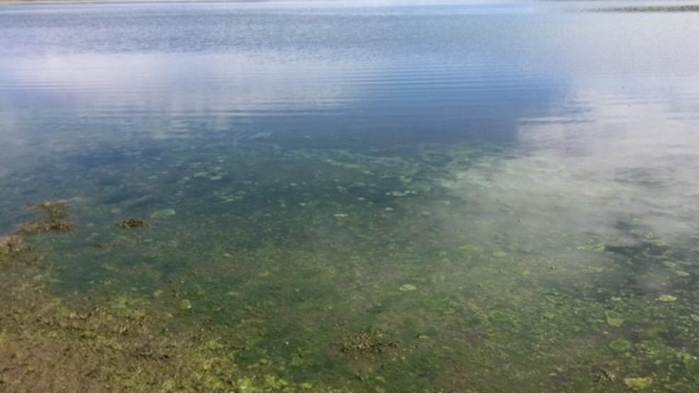 Health Advisory issued at Little Camas Reservoir due to blue-green algae