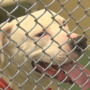 Dangerous dog law may prompt Yakima to revisit pit bull ban