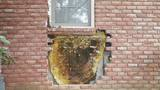 GALLERY: Huge honeycomb discovered underneath brick wall of Tennessee home