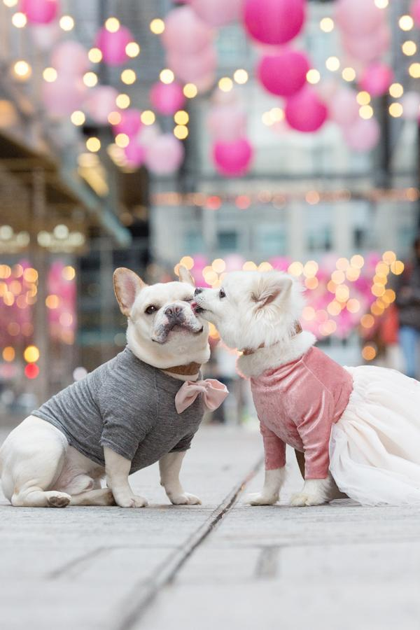 It is no secret that here at DC Refined we LOVE animals! From friendly kangaroos to baby goats doing yoga, a plethora of penguins, Goldendoodles, French Bulldogs, corgis, corgis and more corgis, the adorable animals were definitely the highlight of 2017. (Image: Emily Abril)