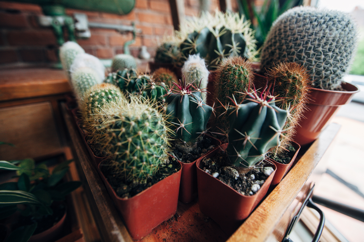 Glasswing is a clothing and home-goods shop in Capitol Hill that also has a great selection of succulents, easy-care plants that have evolved over time to store water within themselves. This means they live longer, and don't take daily maintenance and watering. (Image: Joshua Lewis / Seattle Refined)