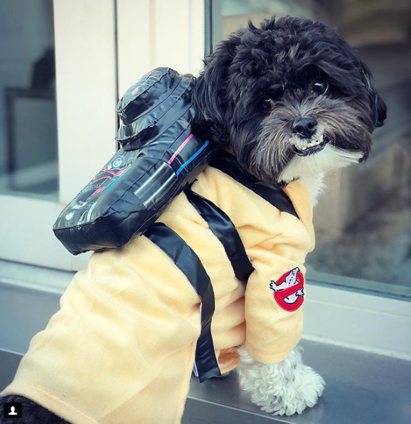 Who you gonna call? GHOSTBUSTERS! (Image: via IG user @whatslincolnthinkin)
