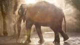 Hundreds celebrate life of beloved Oregon Zoo elephant Packy